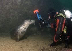 Derek & grey seal.